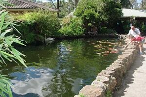 Build A Koi Pond Windsor Fish Hatchery